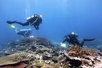 Divers over corals.