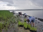 Oyster Reef and Salt Marsh Restoration in South Carolina