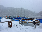 Working in snowy conditions during tagging at Little Port Walter.