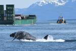 Flame_Juneau-Summer-Whale-Survey_2020_NMFS-JRM-20180517-1-065c_3-2.jpg