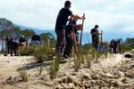 Restoration teams plant grasses on a beach.