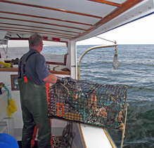 Lobsterman on boat with lobster trap.
