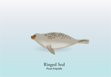 Ringed Seal Graphic