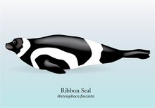 Ribbon Seal Graphic