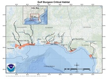 This is a map showing Gulf sturgeon critical habitat in the Southeast U.S.