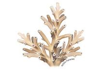 A. jacquelineae coral illustration