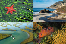 A four image grid with one photo each of different habitat types: sea grasses, shoreline, wetlands, and coral reefs