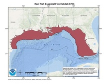 This is a map of reef fish essential fish habitat in the Gulf of Mexico.