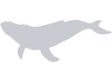 Whales Placeholder Image