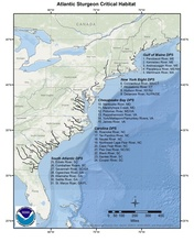 This is a map of Atlantic sturgeon critical habitat from Maine to Florida for regions GARFO and SERO.