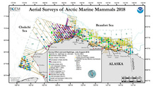 ASAMM July-August 2018 marine mammal sightings by species, tracklines flown, and study area.
