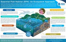 Essential Fish Habitat (EFH), An Ecosystem Approach