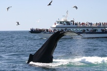 Boats with humpback