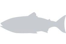 Fish Placeholder Image
