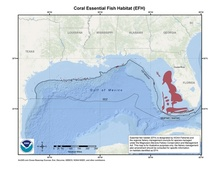 This is a map of coral essential fish habitat in the Gulf of Mexico.