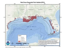 This is a map of red drum essential fish habitat in the Gulf of Mexico.