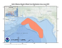 This is a map showing the Gulf of Mexico Bryde's whale core distribution area.