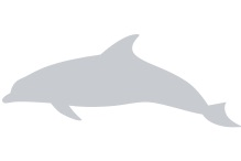 Dolphin Placeholder Image