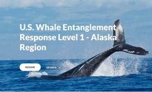 whale-responder-training.jpg