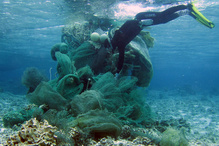 A diver works to remove a large derelict fishing net from the reef at Midway Atoll (NOAA Fisheries).