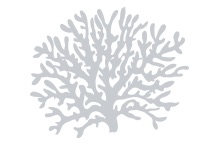Coral Placeholder Image