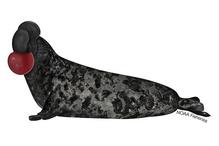 Hoodel seal illustration
