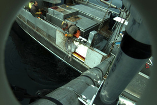 Camera view of skate bycatch on halibut fishing vessel.