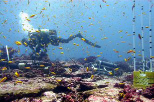Diver conducts coral reef survey