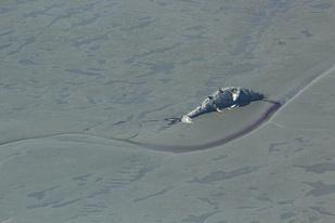 750x500 Theodore River Gray whale.jpg