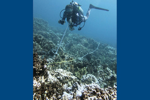 NOAA/JIMAR diver taking photographs along a transect line above the reef.