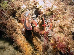 750x500_lobster_credit from Matthew Lawrence.jpg