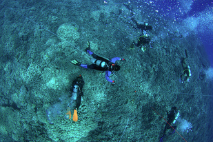 Marine Options Program students diving underwater near coral reef.