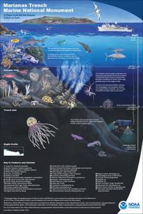 1000x1500-mtmnm-edu-poster-with-key-th-rachel-strader-NOAA-PIRO.jpg