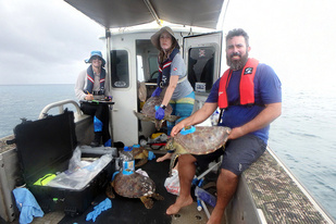 Picture of researchers with turtles on vessel.