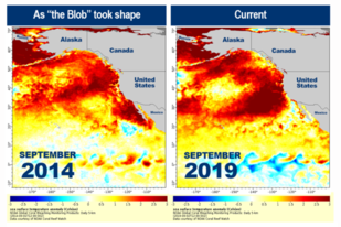 Sea surface temperature anomaly maps show temperatures above normal in orange and red.