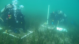 Research divers checking submerged boxes