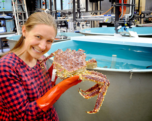 NOAA Fisheries scientist Leah Zacher tests a trial tag on a female red king crab.