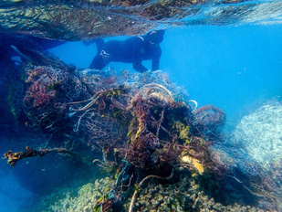 James Morioka dives down to carefully remove a net from the reef.