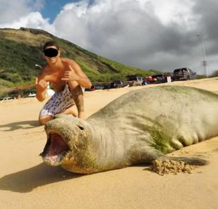 Monk seal selfie.