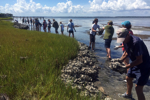 People stand on the shore holding bags of oysters