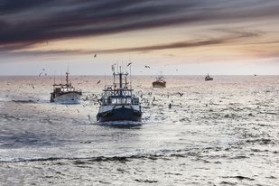 A fleet of commercial fishermen returning to port.