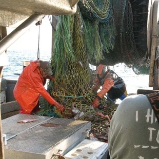 Emptying a trawl net_NOAA Fisheries_John Bullard.jpg