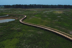 Aerial view of boardwalk in marsh