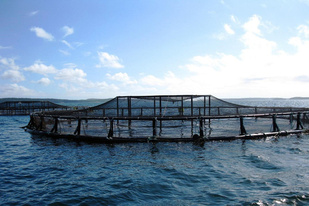 Coastal net pens off the coast of Maine. Credit: NOAA.