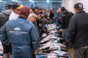 p38-honolulu-united-fish-auction