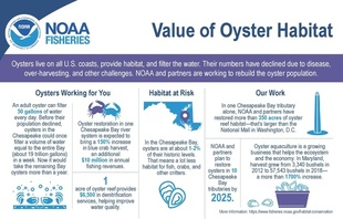 Infographic describing ecosystem and economic benefits provided by oyster reefs