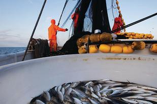 Fishermen at sea.