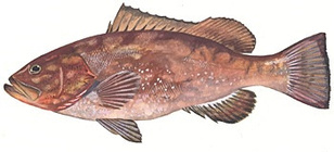 fish-EMORI-illustration.jpg