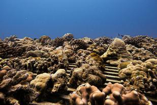 Coral nursery.