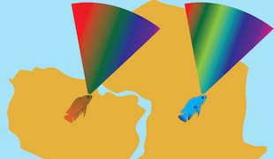 This graphic compares the light spectrum visible to three South American cichlid species (left) with the spectrum visible to many African species (right). South American cichlids have visual systems adapted to the red-shifted light environment of murky Amazonian waters. Image credit: Daniel Escobar-Camacho (Click image to download hi-res version.)